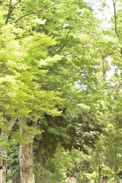 写真: 武蔵一宮氷川神社参道