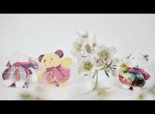 動物たち(お土産)