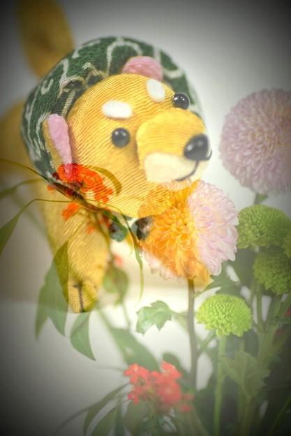 柴犬(伊東のお土産)
