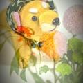 Photos: 柴犬(伊東のお土産)