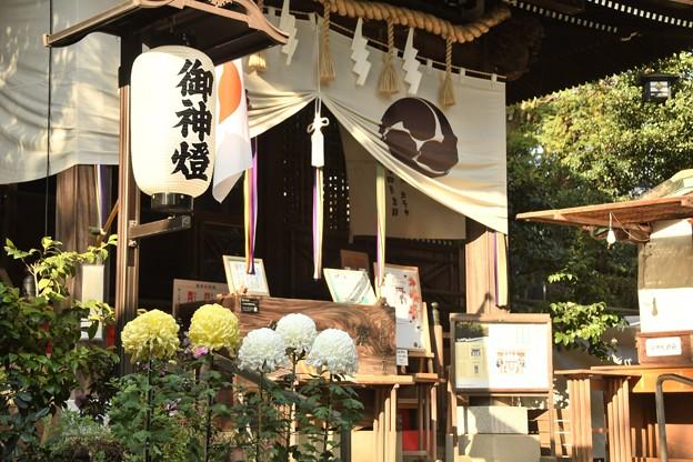 Photos: 太子堂八幡神社(11月)