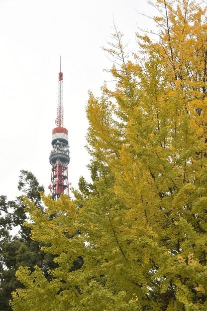 黄葉と東京タワー