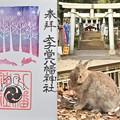 Photos: 太子堂八幡神社の御朱印(12月)