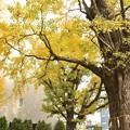 磐井神社(12月)