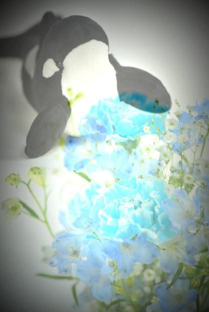シャチ(安房鴨川のお土産)