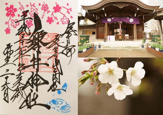 磐井神社(桜)