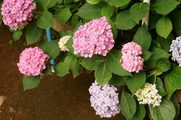 太子堂八幡神社(令和元年6月)