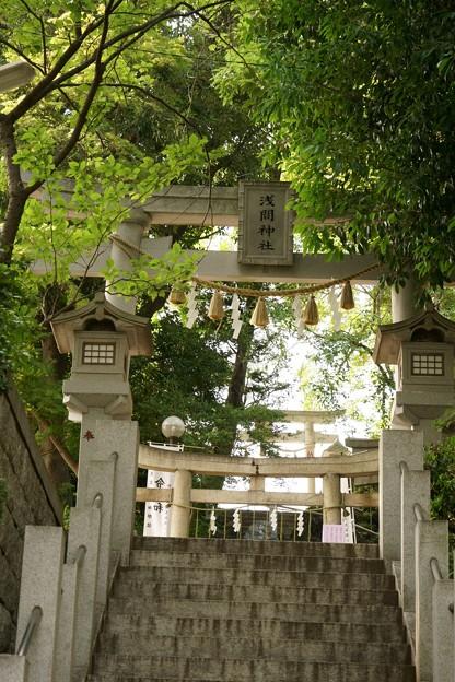 多摩川浅間神社(令和元年6月)