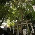 Photos: 多摩川浅間神社(令和元年6月)