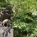 Photos: 磐井神社(令和元年8月)