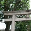麻布氷川神社(令和元年8月)