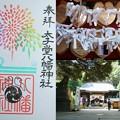 Photos: 太子堂八幡神社の御朱印(令和元年8月)