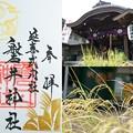 Photos: 磐井神社の御朱印(令和元年9月)