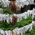 Photos: 麻布氷川神社(令和元年9月)