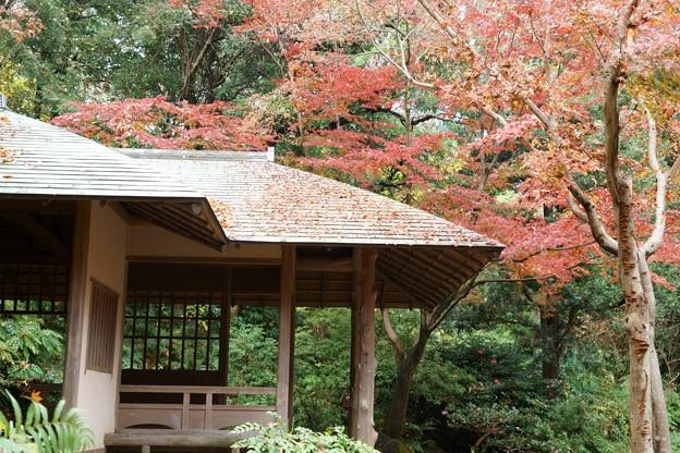 浜松城 日本庭園