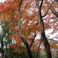 Photos: 浜松城 日本庭園