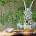 Photos: 五社神社・諏訪神社