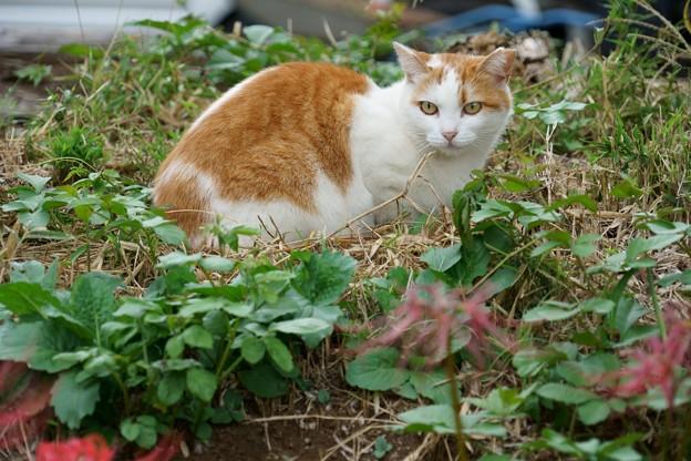 猫と枯れた彼岸花