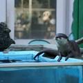 Photos: 智光山公園こども動物園