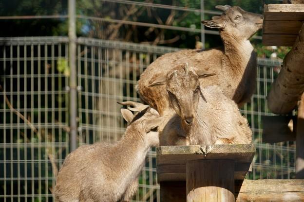 智光山公園こども動物園