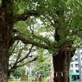 Photos: 磐井神社(令和元年10月)