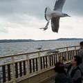 Photos: 浜名湖遊覧船