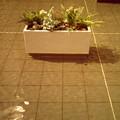 水の中の花壇