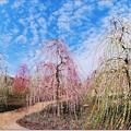 写真: 春告草の小径