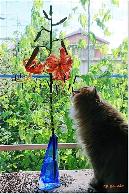 写真: 窓辺