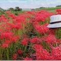 写真: 畦道の華