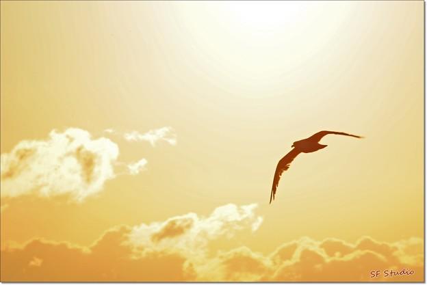 写真: 朝日に飛ぶ