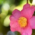 写真: 残り花