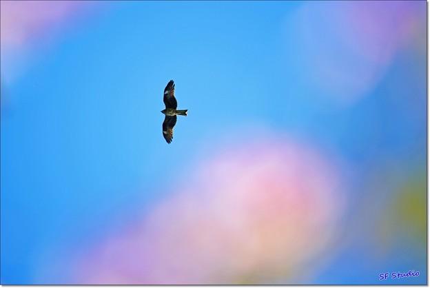Photos: 楼雲にとび