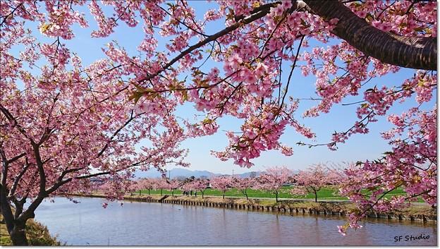 Photos: 憩いの農業水路