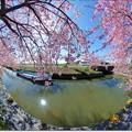 写真: 農業水路を愛でる