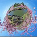 "写真: Little Planet ""SAKURA"""