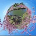 "Photos: Little Planet ""SAKURA"""