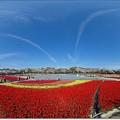 Photos: 360度の春