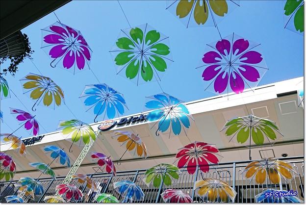 """令和晴れに """"傘の花"""""""