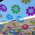 "Photos: 令和晴れに ""傘の花"""