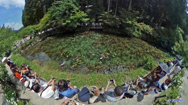 Photos: モネの池 全景