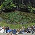 モネの池 全景