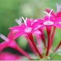 Photos: 吊鉢の花