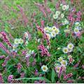 Photos: 野に咲く花のように