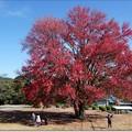 Photos: 花の木