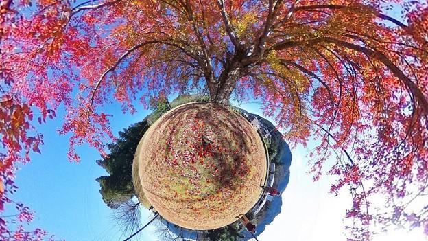 """リトルプラネット """"巨木の花の木"""""""