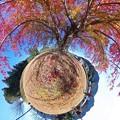 """Photos: リトルプラネット """"巨木の花の木"""""""