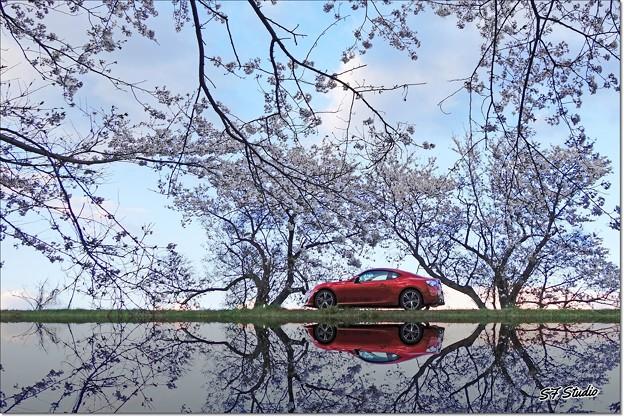 Photos: My Spring Road