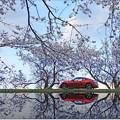 My Spring Road