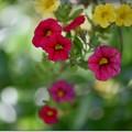 庭の吊り花